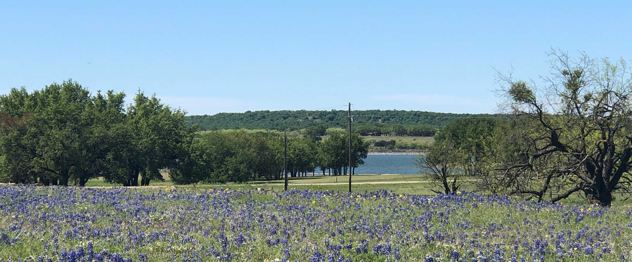 Bluebonnets at Hords Creek
